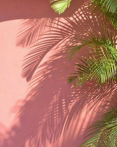 22 Ideas Wallpaper Computadora Tropical For 2019 Plant Wallpaper, Screen Wallpaper, Wallpaper Backgrounds, Trendy Wallpaper, Iphone Wallpaper Tropical, Fred Instagram, Site Art, Tropical Vibes, Tropical Art