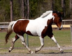 Haile Equestrian in Gainesville, Florida offers horse enthusiasts Boarding, Breeding, and Lessons.  www.GainesvilleFloridaHomes.com