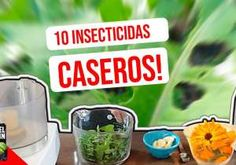 10 Insecticidas caseros orgánicos para controlar las plagas de tu huerto o jardín Indoor Plants Low Light, Growing Flowers, Low Lights, Gardening Tips, Cactus, Diy And Crafts, Health Fitness, Pathways, Ideas Para