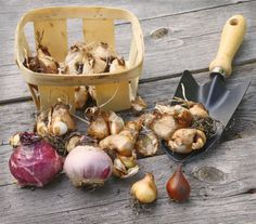 Order summer-flowering bulbs and seeds ready for spring planting.