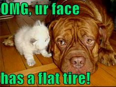 This is hilarious!! -- animal humor | Animal Humor cat & dog funny