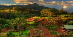 The farm at Kukuiula in Kauai. this is a real picture, people!