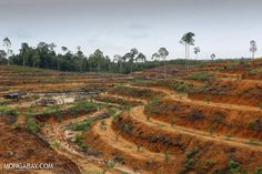 Report rates palm oil companies on sustainability commitments