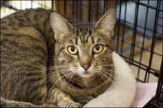 Missy came to us when her owner was evicted from their home. Now Missy is waiting at the shelter for that special someone to come take her home. Could she be waiting for YOU?