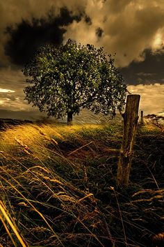 the tree by ~spako