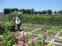 Building a potager garden - gardeningtalk.net