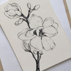 Magnolia, linedrawing