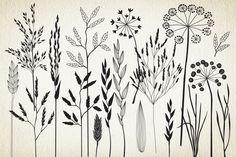 Botanical elements. More than 68