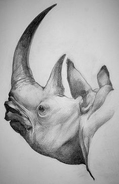 Fine drawing illustration в 2019 г. rhino art, animal drawings и rhino tatt Pencil Drawings Of Animals, Animal Sketches, Drawing Sketches, Rhino Tattoo, Rhino Art, Realistic Drawings, African Animals, Painting & Drawing, Illustration