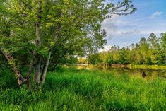 Rzeka, Drzewa, Trawa