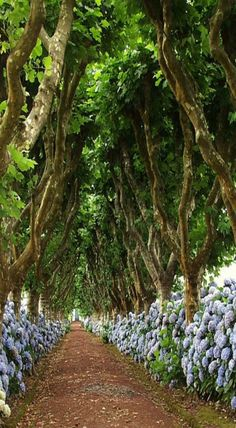 Funchal, Madeira Island - the world's largest conterminous laurisilva forest