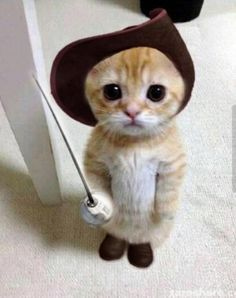 OMG Puss in Boots (kitten version)
