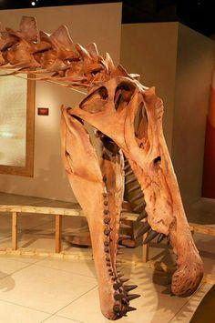 spinosaurus aegpytiacus