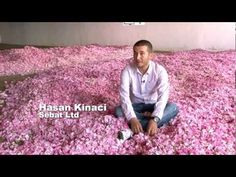 Rosa: extraindo óleo essencial e o concreto | 1 nariz | cursos de perfumaria, resenhas de perfumes importados