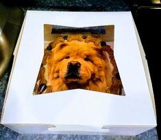 """Dog Birthday Cake - Photo Cakes 8"""" Round Cakes Dog Birthday, Birthday Parties, Birthday Cake, Photo Cakes, Doggie Bag, Round Cakes, Dogs, Party, Animals"""