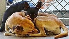 Two dogs who met at shelter only have each other and hearts full of hope