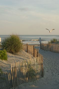 Ocean City New Jersey is named best beach in America Beach Pink, Ocean Beach, Beach Sunsets, Pink Ocean, Ocean Girl, Playa Beach, Seaside Beach, Seaside Towns, Sunset Beach