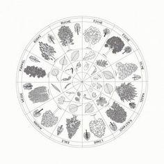 Baumkreis zum Kleben aus Papier (Durchmesser 58 cm)