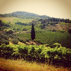 Wine roads of Tuscany, between cypress, vines, sun and grasshoppers...