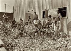 "January 1909. ""Oyster shuckers at Apalachicola, Florida."
