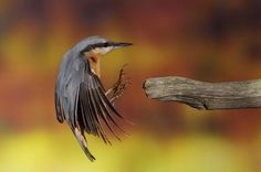 Best shoot of Bird Photography