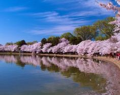 Sightseeing Tours in Washington DC (Which One is Best?): Best Specialized Washington DC Tours