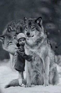 Robin Isely More Animals For Kids, Animals And Pets, Cute Animals, Wolf Spirit, Spirit Animal, Beautiful Creatures, Animals Beautiful, Wolves And Women, Wolf Love
