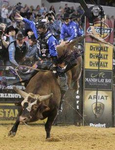 PBR-Bushwacker amazing bull! Have seen him live! Tough to ride!!