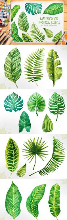 Set of 15 watercolor tropical leaves illustrations. Illustrations are drawn by…