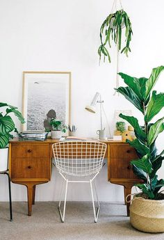 Beautiful mid-century desk surrounded by plants. I would love to have hanging plants and tall plants like this surrounding my work space.