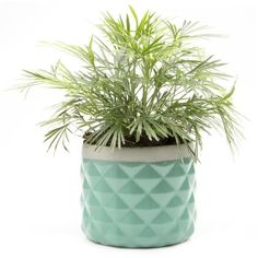 Pina Mini Flower Pot : Seafoam (€9,82) ❤ liked on Polyvore featuring home, home decor, plants, filler, decor, flowers, concrete flower pots, concrete planters, mini plant pots and mini succulent pots