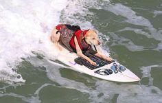 surfing-dog-sugar-huntington-beach-lunasurf-surfboard-traction-wetsuits.jpg