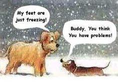 Poor puppies