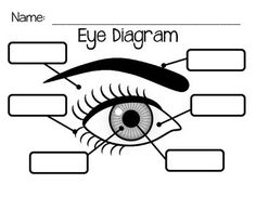 Ear anatomy diagram telling what each part does science pinte eye diagram ccuart Choice Image
