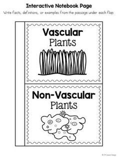 Vascular and Nonvascular Plants: Cut and Paste Sorting