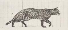 Eadweard Muybridge, Animal Locomotion, c. 1887. Originally posted by magictransistor