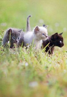 (Left to right) Bluekit, Tom, Doekit, she-cat, Crowkit, tom. All the kits of Mapleleaf.