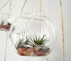 Airplants.  This would be fun!  I haven't had airplants in decades & forgot all about them!