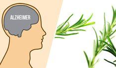 Hair Beauty, Herbs, Health, Survival, Free, Diet, Health Care, Herb, Salud