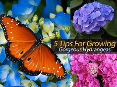 """We all know that keeping up with plants can be a difficult task, but these tips will help you create something beautiful with your bare hands (and hopefully prevent you from killing it.) The post from """"This Old House"""" on growing hydrangeas answers frequently asked questions along with... #spr #sum"""