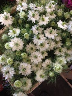 Nigella 'bos wit'...Sold in bunches of 10 stems from the Flowermonger the wholesale floral home delivery service.