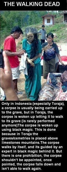 Bring out your DEAD! #dead #death ! #ZOMBIES #zombieapocolypse #livingdead #thewalkingdead