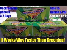 How To Get Rid Of Brown German Cockroaches Traps Treatment German Cockroach, Alabama News, Bees And Wasps, Pets 3, Humming Bird Feeders, Natural Home Remedies, Fix You, Pest Control