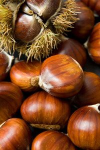Plant an American Chestnut Tree in your home orchard for delicious, sweet kernel nuts. Explore Willis Orchards for a variety of top-quality Chestnut Trees! Fruit And Veg, Fruits And Vegetables, Photo Fruit, American Chestnut, Roasted Chestnuts, Fast Growing Trees, Exotic Fruit, Foto Art, Seed Pods