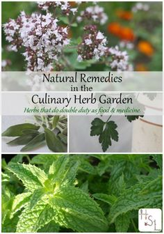 Find natural remedies in the culinary herb garden and all that space and those plants to serve double duty in the home.