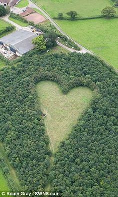 When Janet Howes died suddenly 17 years ago, her devoted husband wanted to create a lasting tribute to her.  The farmer planted thousands of oak saplings in a six-acre  field – but left a heart-shaped  area in the middle pointing towards his wife's childhood home.