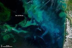 Phytoplankton bloom off coast of France