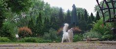 Tara 4th of July 2007 - 103318313015077058625 - Picasa Web Albums