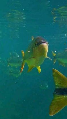 Funny Animal Videos, Cute Funny Animals, Swimming Gif, Fish Gif, Beautiful Sea Creatures, Bright Paintings, Water Animals, Nature Gif, Beautiful Nature Wallpaper