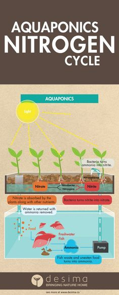 Aquponics is easy, don't be put of by this complex infographic.    Share this infographic on your site.  Infographic by &